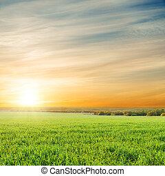 sur, champ, vert, orange, coucher soleil, herbe