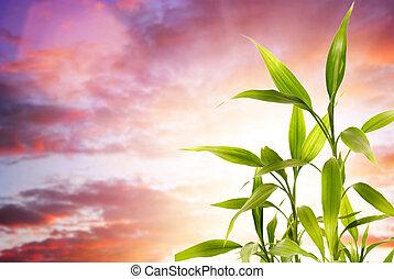 sur, clody, fond, frais, bambou, feuilles