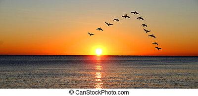 sur, coucher soleil, migrer, canards, océan, pendant