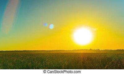 sur, coucher soleil, moule, champ
