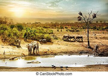 sur, escena, fauna, fantasía, africano, safari
