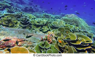 sur, fish, exotique, fermé, récif, corail, thaïlande