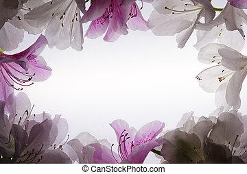 sur, fleur, fond, blanc, cadre