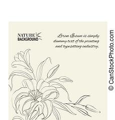 sur, fleur, lis, isolé, white.