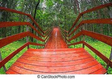 sur, forêt, pont, pluvieux, bois, jour été, ravin