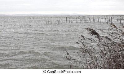 sur, intempérie, albufera, valencia., wetland
