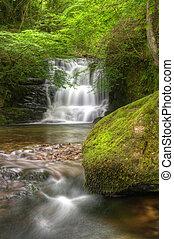sur, luxuriant, scène, long, brouillé, rochers, lichen, forêt verte, mousse, écoulement, chute eau, couvert, par, exposition