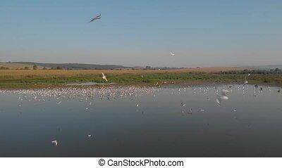 sur, marshland., oiseaux volant, troupeau