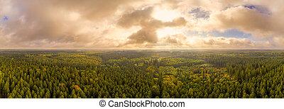 sur, merveilleux, coup, automne, panoramique, forêt, bourdon, lumière, octobre.