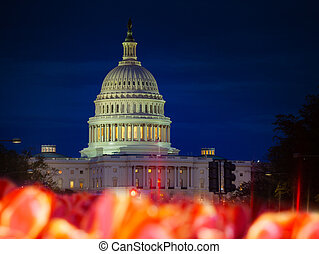 sur, nous, lit, capitole, tulipe, fleur, nuit, bâtiment