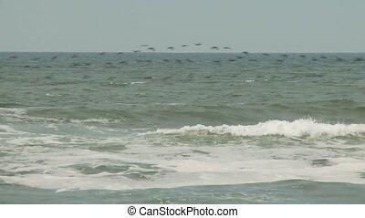 sur, oiseaux, océan
