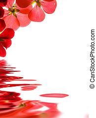 sur, refléter, fond, fleurs blanches, rouges