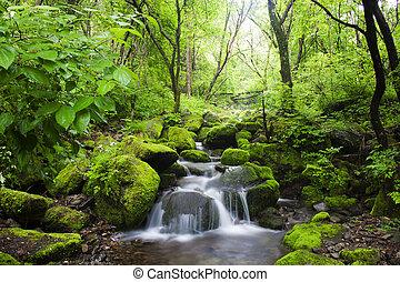 sur, sang-dong, musgo, corea, valle, paisaje, hermoso