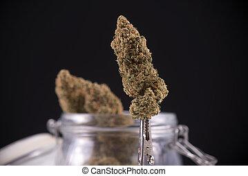 sur, strain), détail, isolé, cannabis, noir, séché, fissure, bourgeon, (green