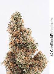 sur, strain), détail, isolé, cannabis, séché, fissure, blanc, bourgeon, (green