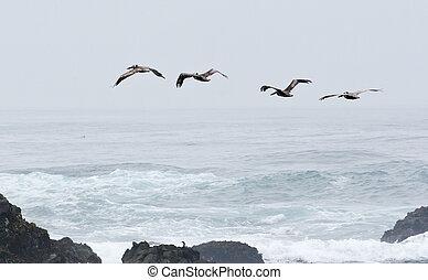 sur, voler, brouillard, par, vagues, oiseaux