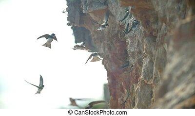 sur, voler, ensoleillé, oiseaux, mer, troupeau, jour, falaise