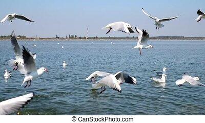 sur, voler, mer dupe, troupeau