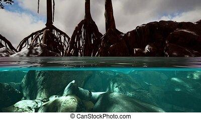 surface, arbres, au-dessous, mangrove, au-dessus, mer
