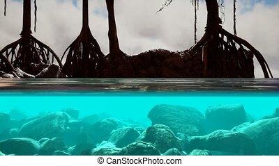 surface, arbres, mangrove, au-dessus, au-dessous, mer