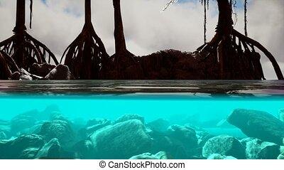 surface, au-dessous, mangrove, arbres, mer, au-dessus