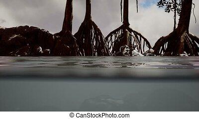 surface, au-dessous, mer, au-dessus, arbres, mangrove