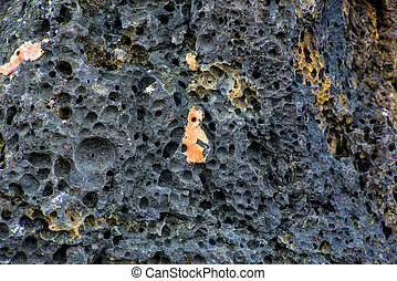 surface of a volcanic rock