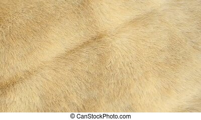 Surface of light beige eco fur coat abstract background...