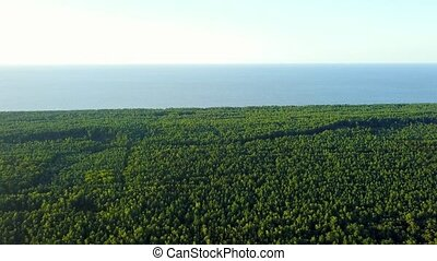 Surface of tree tops - Aerial panorama of spacious green...