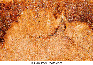 Surface of tree trunk with rings