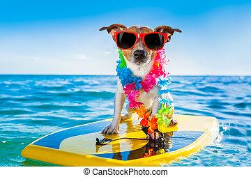 surfer, chien