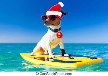 surfer christmas santa claus dog