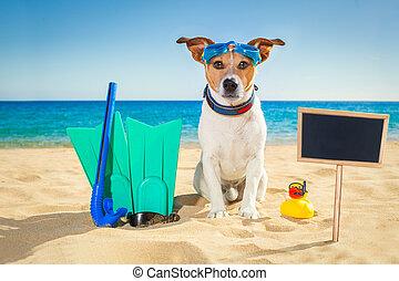surfer dog beach