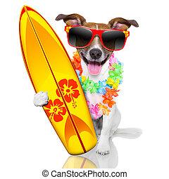 surfer, hund