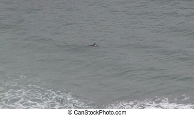 surfer swimming - surfer at beach in Asturias Spain Europe