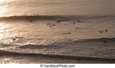 Surfers on the waves in the evening at sunset aerial view