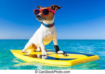 surfeur, chien
