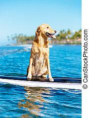 surfing, dog