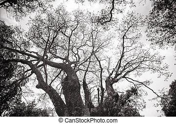 surgelé, arbre, résumé, branches