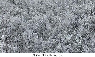 surgelé, blanc, forêt