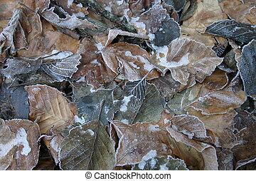 surgelé, feuilles