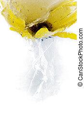 surgelé, fleur