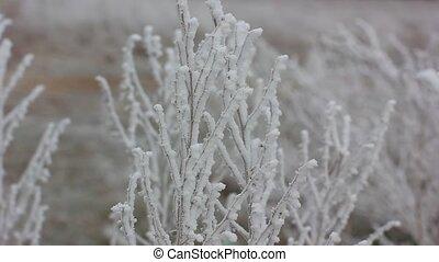 surgelé, hiver, branche