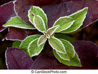 surgelé, plante