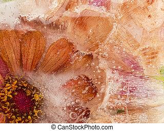 surgelé, rouge-orange, fleur
