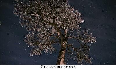 surgelé, timelapse, arbre