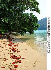 surin, sziget, nemzeti park