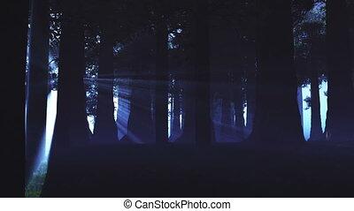 surnaturel, forêt, lightrays, 3