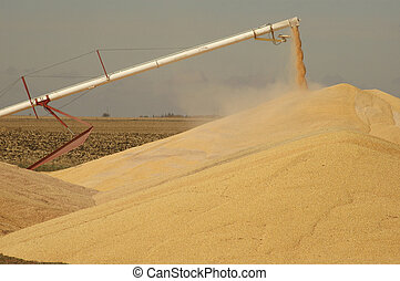 Surplus corn being dumped in Iowa