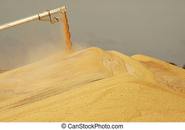 Surplus corn discharging from spout onto pile in Iowa